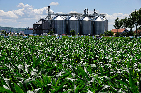 Silosi - Nedovoljna je zastupljenost odvajanja pšenice po kvalitetu; foto: V. Lazić