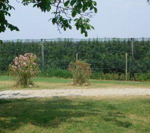 Zasad krušaka je ograđen i pod protivgradnom mrežom