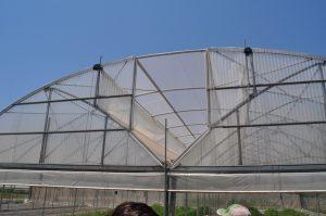Patentiran novi tip plastenika sa prirodnom ventilacijom